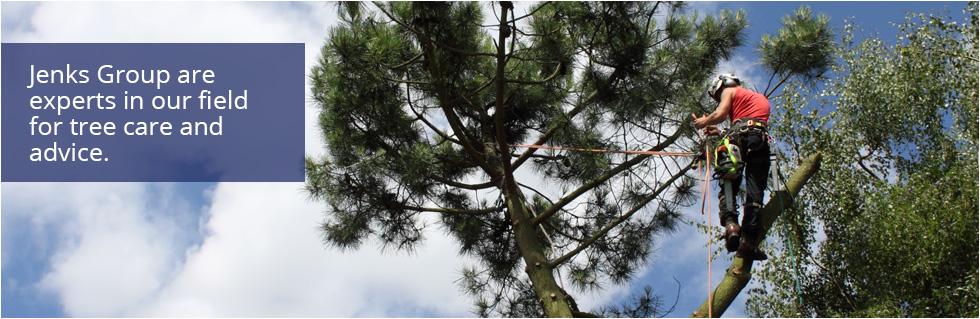 Jenks Group Tree Care