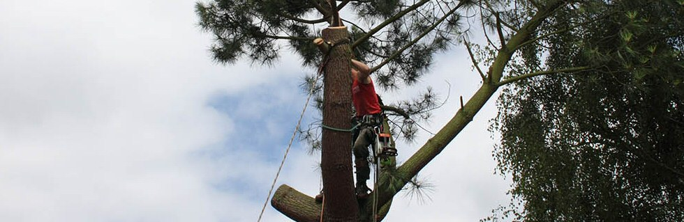 Jenks Group Tree Care